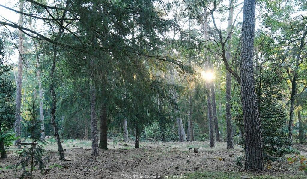 Natuurbegraafplaats Haaksbergen