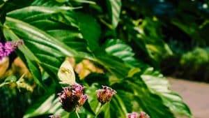 Aula Scholtenhagen - Tuin vlinder